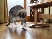 謎の行動 - ぎんネコ☆はうす