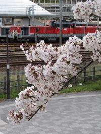 機関区と桜 - タビノイロドリ
