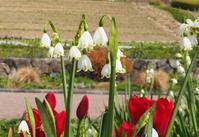 妖精のように愛らしい花 - 神戸布引ハーブ園 ハーブガイド ハーブ花ごよみ