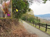 ミヤマセセリの卵 - 秩父の蝶