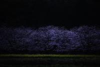 春の漆黒 - little island walking,