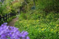 春を急ぐ野草園〜③園内と周辺の春 - 柳に雪折れなし!Ⅱ