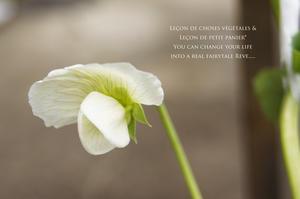 小さな庭便り。 - 暮らしをつむぐ。* 暮らしごと・日々のこと*