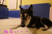 ジェンちゃん13歳8ヶ月のおかえり〜♪【動画】 - HAMAsumi-Life