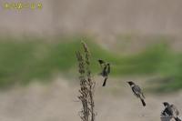 夏鳥到着 - 奥武蔵の自然