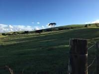 4月、中間報告/Under The Weather at The Moment - アメリカからニュージーランドへ