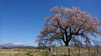 ジムニーで車中泊お花見&野宿 - コアラとタヌキ