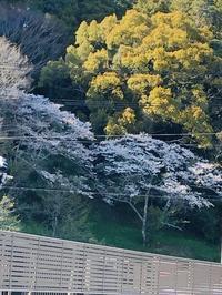 春のひま時間と手放したカトラリー - ひまづくり日記(50歳からの暮らしのヒント)