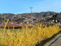 阪急トラピックスで行く三春滝桜と若冲観賞の日帰り旅その3花見山公園 - ふつうの生活 ふつうのパラダイス♪