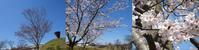 春爛漫の七尾から石川県病院協会理事会へ - 神野正博のよもやま話