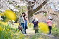 桜咲く - くすりやさんの戯言