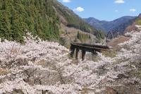 2019 桜撮影遠征-岐阜-高山線ー - さんたの富士山と癒しの射心館