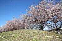2019 桜撮影遠征-愛知散策no1 - さんたの富士山と癒しの射心館