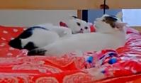 まるたま - 素人木工雑貨と犬猫日記