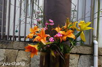 美観地区街角の花 - 下手糞でも楽しめりゃいいじゃんPHOTO BLOG