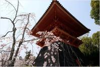 京都仁和寺から哲学の道へ - 4にゃん日記+