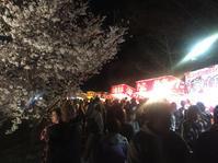 満開の桜、上田城跡公園で。 - フリーアナウンサー 佐藤真生 ~ まきの巻 ~