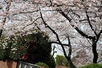 横濱紀行 9 山手 - 味わう瞬間 (とき)