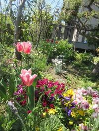 庭仕事色々 - てんねん生活 ARAKOKI