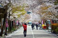 桜道 - 片眼を閉じて見る世界には・・・。