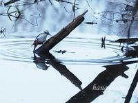 春浅い静かな森の中で - こもれびの森