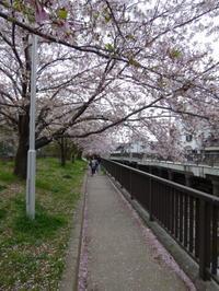 今月のノルディック・ウォーク体験イベント - 大阪北摂のノルディック・ウォーク!TERVE北大阪のブログ