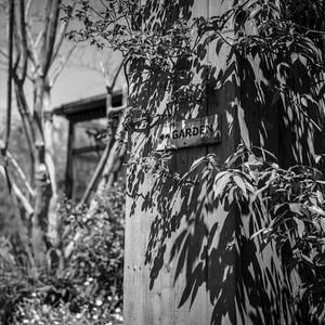 庭園の入り口にたむろする光蜥蜴 - Silver Oblivion