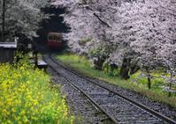 春の飯給駅 - Patrappi annex