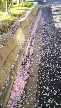 桜が散ったなぁ~。 - ほっこりぐらし