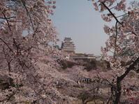 姫路城の桜③ - とりあえず撮ってみました