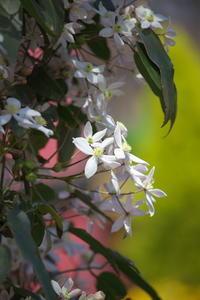 早春の様々 - tokoのblog