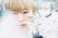 桜ポートレート ULTRAMAX編 - photomo