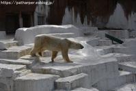 2019年3月天王寺動物園2その2 ペンギンガイド - ハープの徒然草