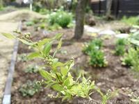 春の庭しごと庭のモグラ対策 - シンプルで心地いい暮らし