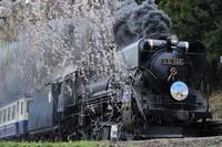 春爛漫 - new 汽車の風景