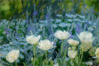 白い花 - 光のメロディー