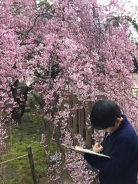 作文コース、大盛況の春!ららら♫ - 国語で未来を拓こう