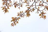 植物写真WSに参加して ⑵ - ecocoro日和