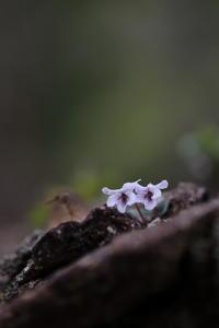 植物写真WSに参加して ⑴ - ecocoro日和