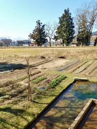 週末は家庭菜園で準備を始めました - 浦佐地域づくり協議会のブログ