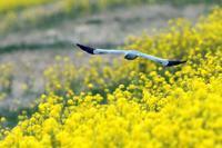 草原のハンター - 比企丘陵の自然