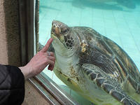 4月17日(水)懸案事項 - ほのぼの動物写真日記