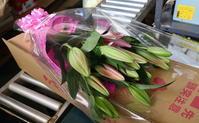 今年も母の日にユリを贈る♡ - ユリ 百合 ゆり 魚沼農場の日々
