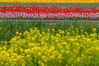 はむら花と水の祭り - デジカメ写真集