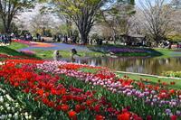 2回目の昭和記念公園 - 今日の小さなシアワセ