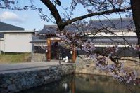 松本城のサクラ。まだ早かった。 - 『幸せ趣味日記!』 : ・・・・・・・・・・・・・・・自転車、カメラ、登山、オーディオ、楽しい趣味と日々の報告会なのです。