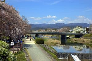 桜の季節を待ち焦がれています・♪ -