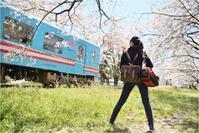 樽見鉄道で桜乙女 - あ お そ ら 写 真 社