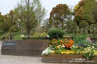 猿江恩賜公園の入り口付近の花が彩とりどり(^^♪ - 自然のキャンバス