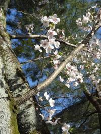 往く春を惜しんで - 大橋みゆき  音楽の花束をあなたに・・・